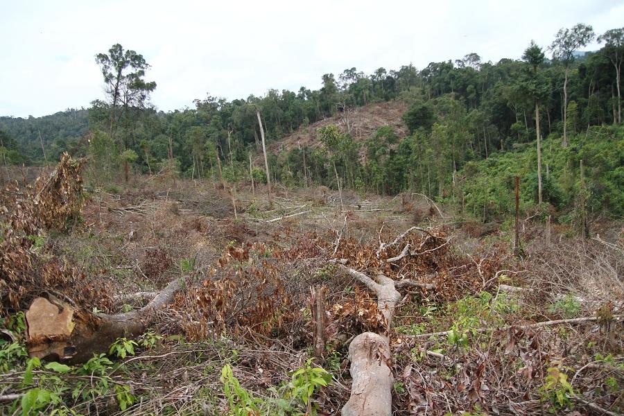sử dụng đất phi nông nghiệp